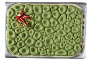 Dekomatte für Glacebehälter Coral